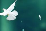 De betekenissen van het vasten van de maand Ramadan